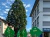 Bei diesem Baum sehen unsere Symbolbäume sehr klein aus.